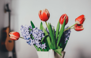 6 Tipps wie Sie Schnittblumen länger frisch halten