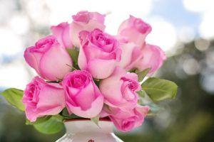 Rosa Rosen zum Muttertag